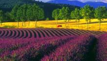 La Vender in Provence