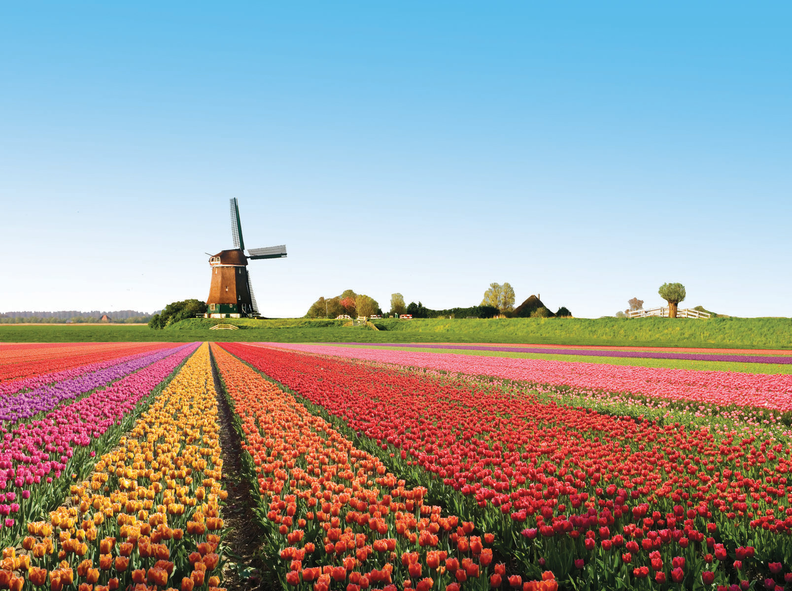 Enjoy The World 39 S Most Beautiful Flowering Seasons