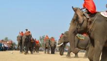 Vietnam Elephant Racing Festival