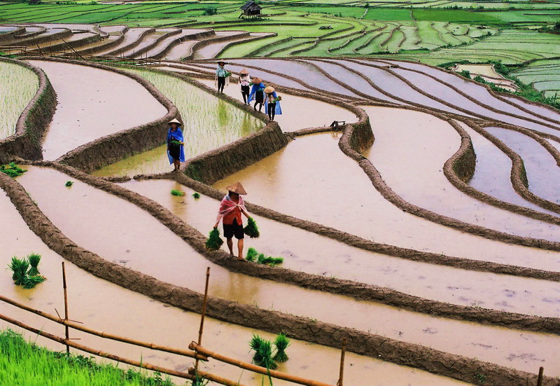 Mu Cang Chai in Vietnam – Terraced rice fields for photo tour from June to October